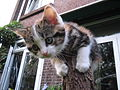Kitten stuck on top of a tree trunk.jpg