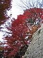 Kiyomizu-dera National Treasure World heritage Kyoto 国宝・世界遺産 清水寺 京都30.JPG