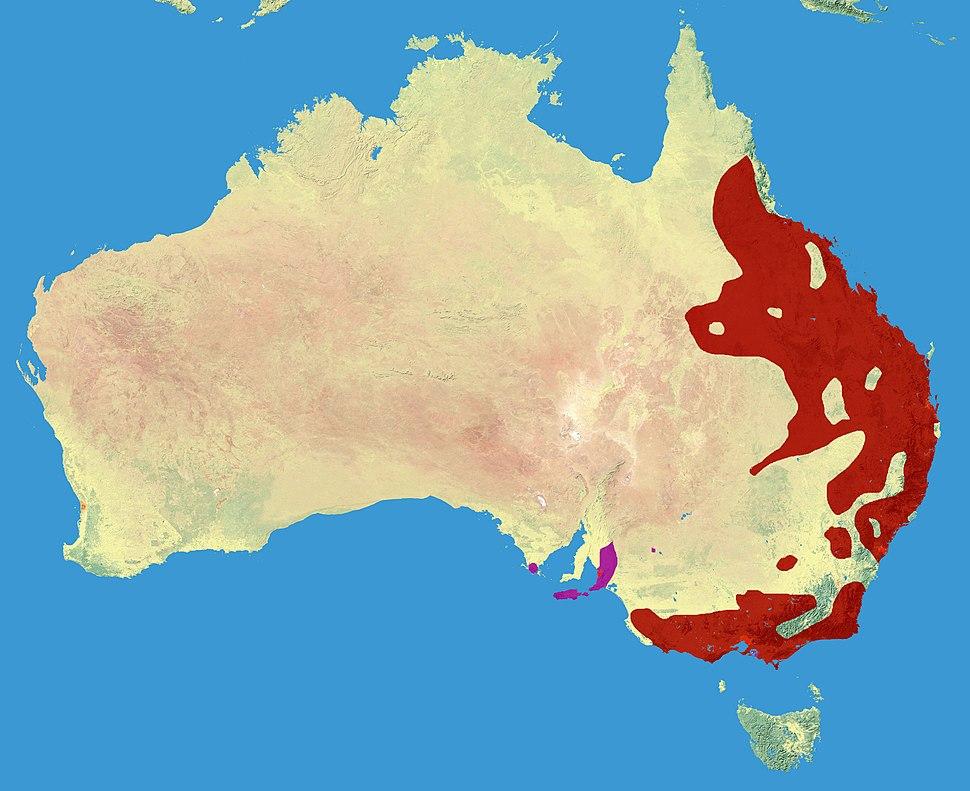 Koala Range