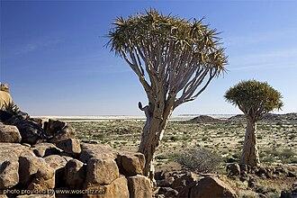 ǁKaras Region - Quivertree Forest - Namibia