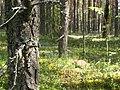 Kortkerossky District, Komi Republic, Russia - panoramio (2).jpg