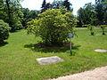 Kostelecký zámecký park (50).JPG