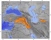 Kurden.jpg