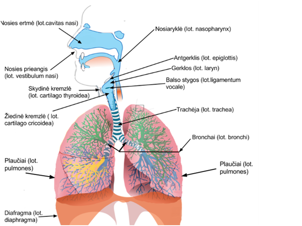 Gyvunu organu sistemos