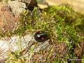 Lady Bug (4501877292).jpg
