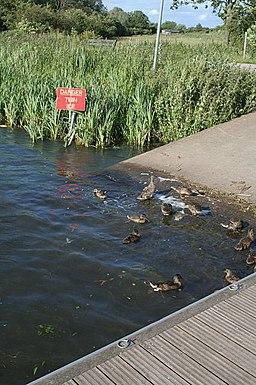 Lakeshore on Kings Mill lake - geograph.org.uk - 857026