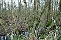 Landschap De Stroopers te Kemzeke - 371984 - onroerenderfgoed.jpg