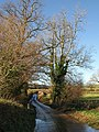 Lane to Wash Cross - geograph.org.uk - 1074403.jpg