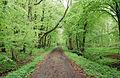 Langes Tannen Waldweg 07.jpg