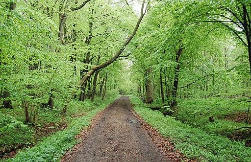 Langes Tannen Waldweg 07