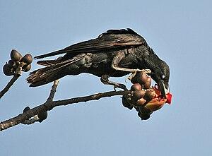 имеют перелетные птицы посто¤нные еста зимовки