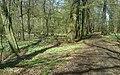 Las wczesną wiosną - nucek - panoramio.jpg