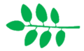 Leaf morphology alternipinnada.png