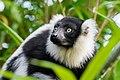 Lemur (24677045048).jpg