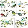 Life history of habitat-forming taxa in coastal ecosystems.jpg