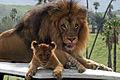 Like Father like Son.jpg