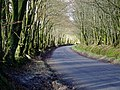 Line of trees near Powlers Piece - geograph.org.uk - 312926.jpg