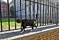 London October 5 2018 (38) Palmerston Chief Mouser of the Foreign & Commonwealth Office at Whitehall (44210185305).jpg