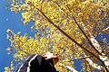 Looking up at a tree, Calgary (5513113466).jpg