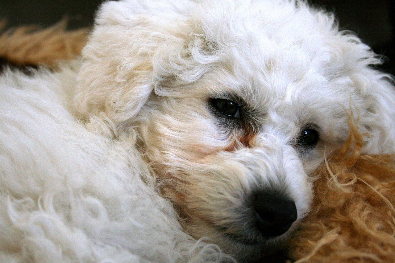 Fur Around Dog S Anus Darker