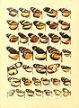 Macrolepidoptera15seit 0069.jpg