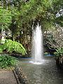Madeira em Abril de 2011 IMG 1742 (5663763226).jpg