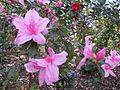 Magnolia Plantation and Gardens - Charleston, South Carolina (8556492874).jpg