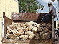 Man with Truckload of Rock - Valladolid - Yucatan - Mexico.jpg