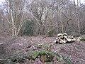 Management, Bubbenhall Wood - geograph.org.uk - 1709282.jpg