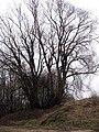 Mangaļu pussala, strom.jpg
