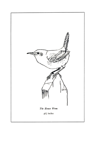 File:Manual of Bird Study 0022-5.png