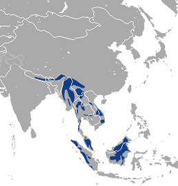 Marbled cat range