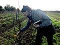 Marie-Ève Lacasse dans les vignes de l'Échalier.jpg