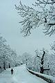 Marzano Appio - Inverno.jpg