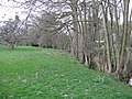 Meadow By Humber Brook - geograph.org.uk - 1235169.jpg