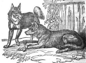 Wolfdog - British wolfdogs, as illustrated in The Menageries: Quadrupeds Described and Drawn from Living Subjects by William Ogilby, 1829