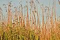Mentor Marsh Nature Preserve (9594938637).jpg