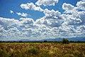 Meru National Park, Kenya - 31288269880.jpg