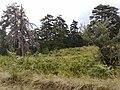 Mesolouri 510 32, Greece - panoramio (27).jpg