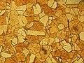Microstructure of rolled and annealed brass; magnification 400X.jpg