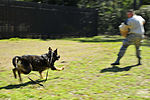 Military Working Dogs DVIDS258007.jpg