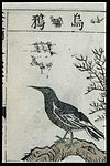 Ming herbal (painting); Crow Wellcome L0039445.jpg