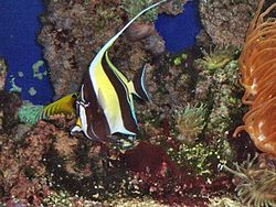 Monaco.Musée océanographique069.jpg