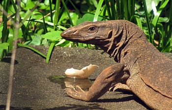 Monitor lizard image.jpg