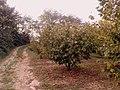 Montevalenza countryside - panoramio.jpg