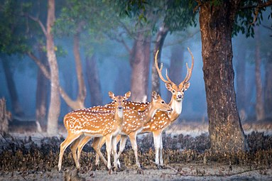 Morning walk of deer.jpg