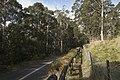 Mount Wilson NSW 2786, Australia - panoramio (45).jpg