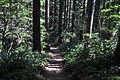 Mt. Walker Trail 06.jpg