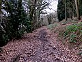 Muddy track on the Penyard - geograph.org.uk - 1116341.jpg