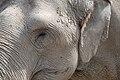 Muenster-100720-15839-Zoo.jpg